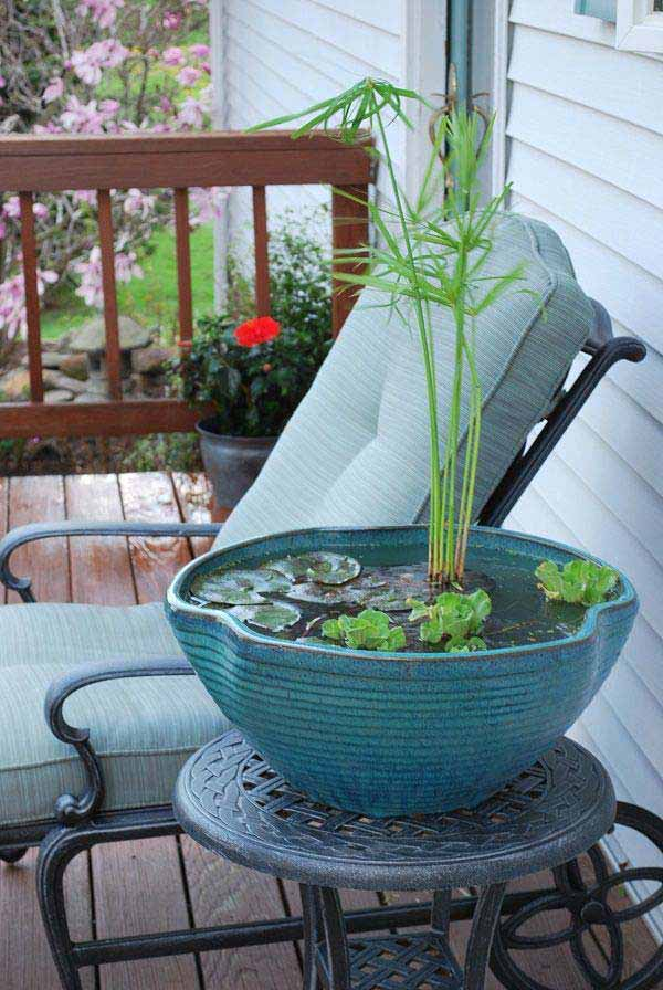 AD-Mini-Pond-In-A-Pot-3