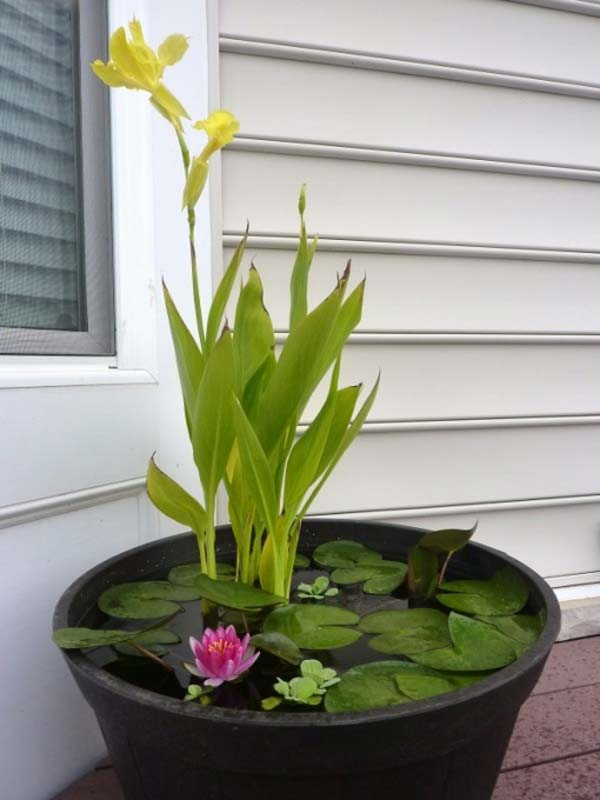 AD-Mini-Pond-In-A-Pot-4